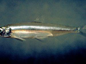 Endangered Species revisions put science before political activism