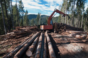 Forest Service Considers Changing Rule That Prevented Logging Of Some Northwest Old-Growth Trees