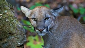 Animals Still Die When Hunting Is Banned